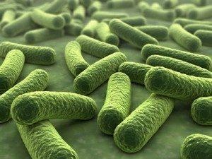 Bakterien unter dem Mikroskop. © norman blue - Fotolia.com