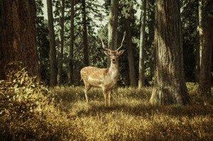 Helfen Sie mit, die Schönheiten der Natur zu erhalten! © lassedesignen - Fotolia.com