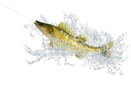 Fisch gilt immer noch als eines der gesündesten Lebensmittel.